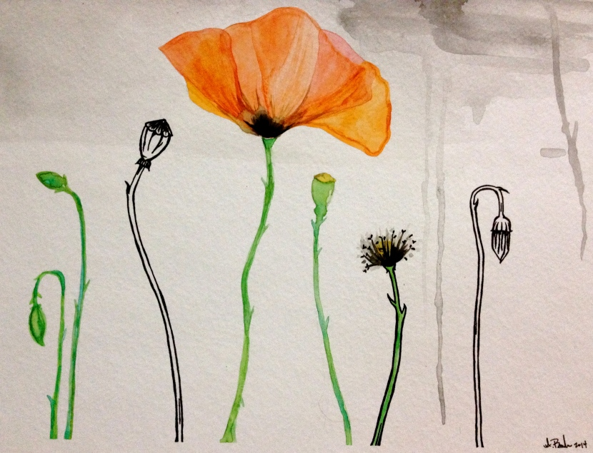 POPPIES (inspired by Chogyam Trungpa Rinpoche)